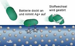 Micromed Zahnfinger aktion - Hemosfaser